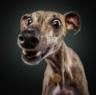 Собака_Барабака